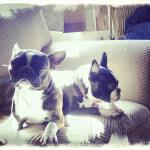Doggies - Barlow Trail Veterinary Clinic