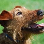 Quinn - Barlow Trail Veterinary Clinic