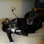 Sam - Barlow Trail Veterinary Clinic